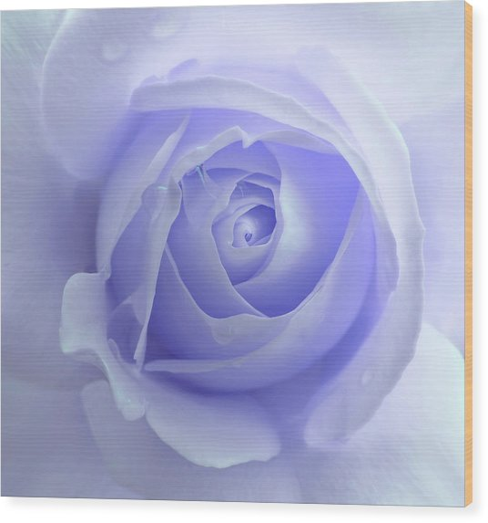 Pastel Purple Rose Flower Wood Print