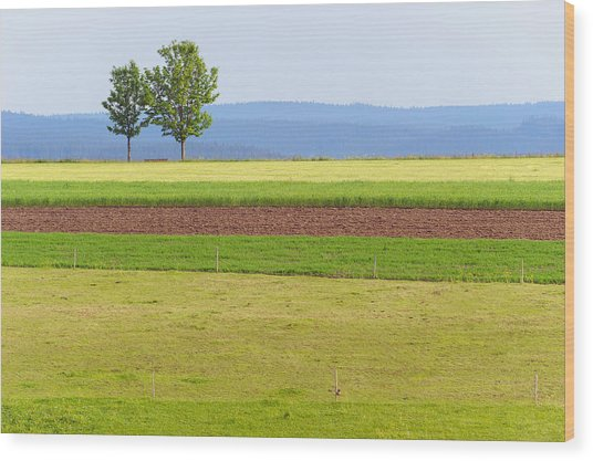 Pastoral Minimalism Wood Print