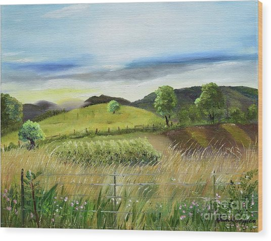 Pasture Love At Chateau Meichtry - Ellijay Ga Wood Print