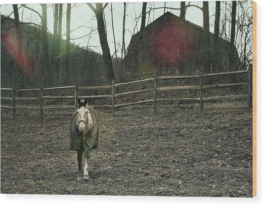 Pasture Pony Wood Print by JAMART Photography