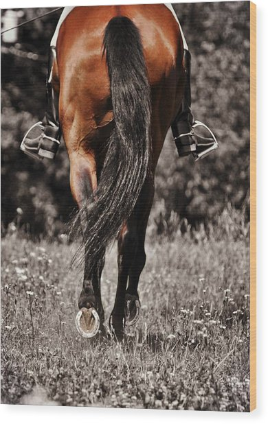 Pasture Practice Wood Print by JAMART Photography