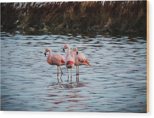 Patagonia Flamingoes Wood Print