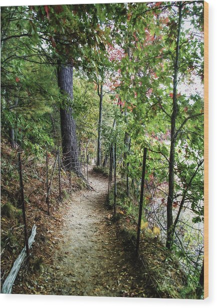 Path Along The Pond Wood Print