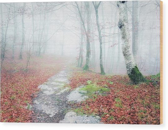 Path In The Forest Wood Print