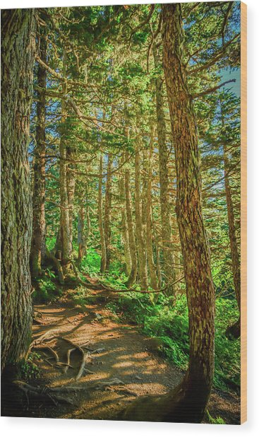 Path In The Trees Wood Print