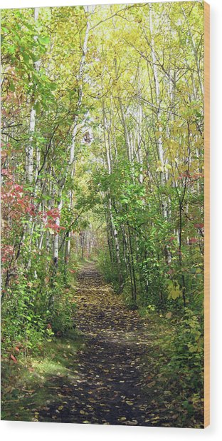 Path In The Woods 3 Wood Print