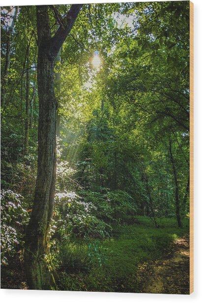 Path Lighting Wood Print