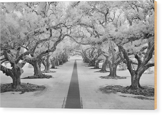 Path Of Dreams  Wood Print