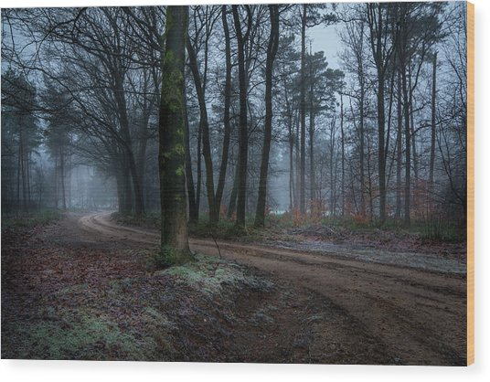 Path Through The Forrest Wood Print