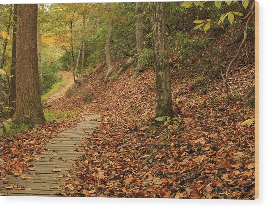 Path To Autumn Wood Print