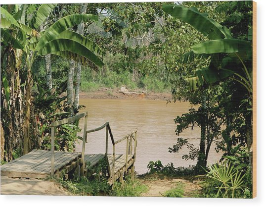 Path To The Amazon River Wood Print