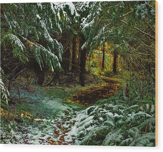 Path To The Light Wood Print by Wilbur Young
