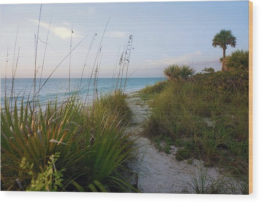 Pathway To Barefoot Beach  In Naples Wood Print