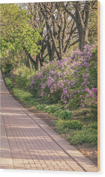 Pathway To Beauty In Lombard Wood Print