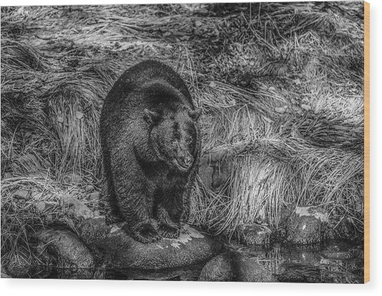 Patient Black Bear Wood Print