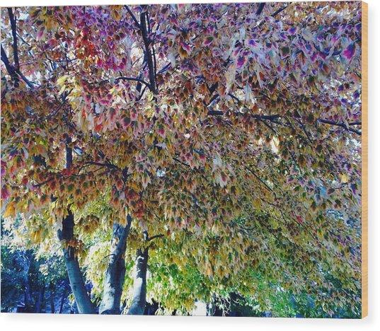 Patterned Metamorphosis Wood Print