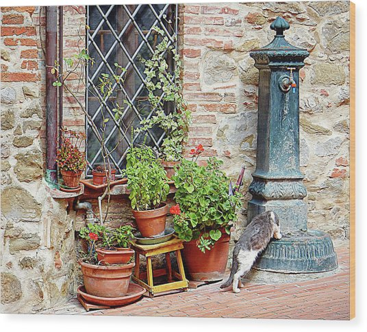 Pawse For A Drink In Paciano Wood Print