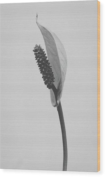 Peace Lily #3  Wood Print