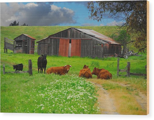 Peaceful Cows Wood Print