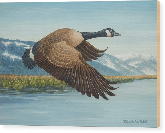Peaceful Flight Wood Print