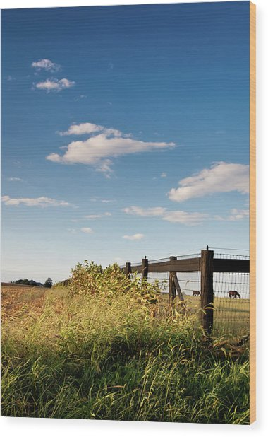 Peaceful Grazing Wood Print