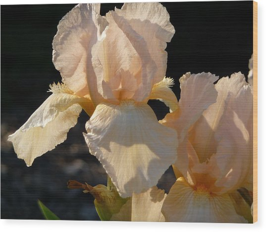 Wood Print featuring the photograph Peach Bearded Iris by Ruth Kamenev
