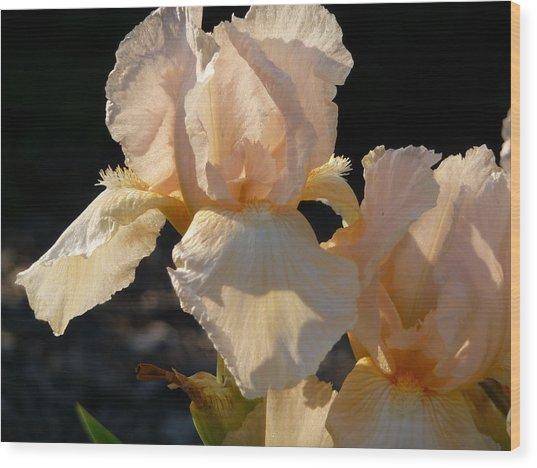 Peach Bearded Iris Wood Print
