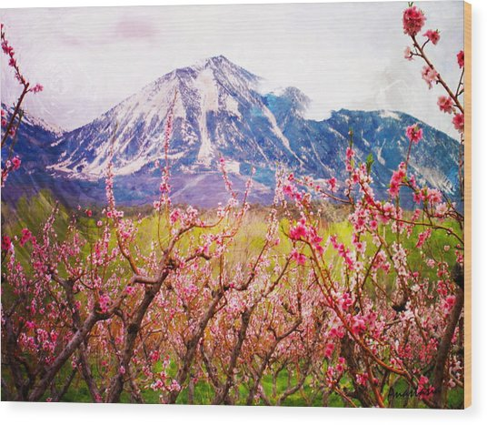 Peach Blossoms And Mount Lamborn II Wood Print