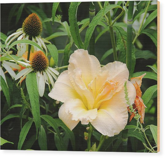Peach Day Lily Wood Print