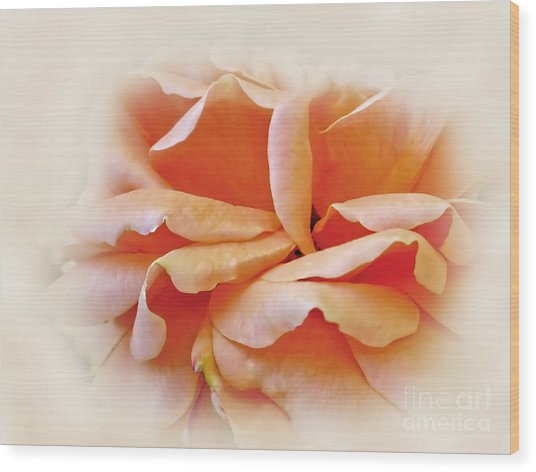 Peach Delight Wood Print