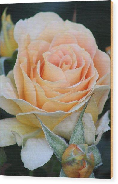 Peach Rose 2 Wood Print