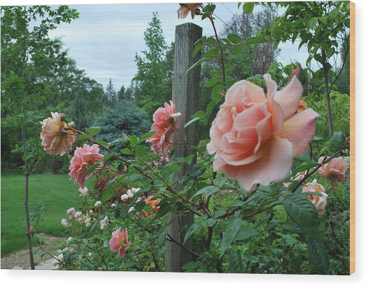 Peach Rose Wood Print by Linda Sramek