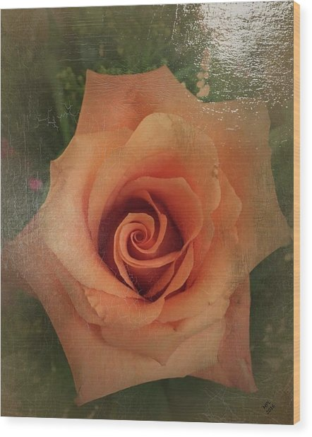 Peach Rose Wood Print
