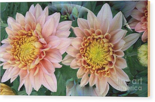 Peachy Chrysanthemums Wood Print