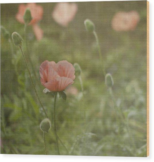 Peachy Poppies Wood Print by Rebecca Cozart