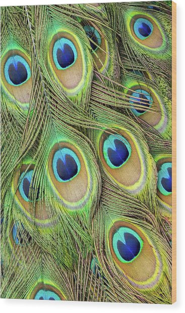 Living Peacock Abstract Wood Print