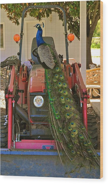 Peacock And His Ride Wood Print