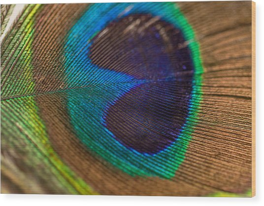 Peacock Feather Macro Detail Wood Print