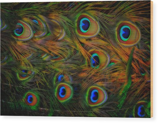 Wood Print featuring the photograph Peacock Feathers by Harry Spitz