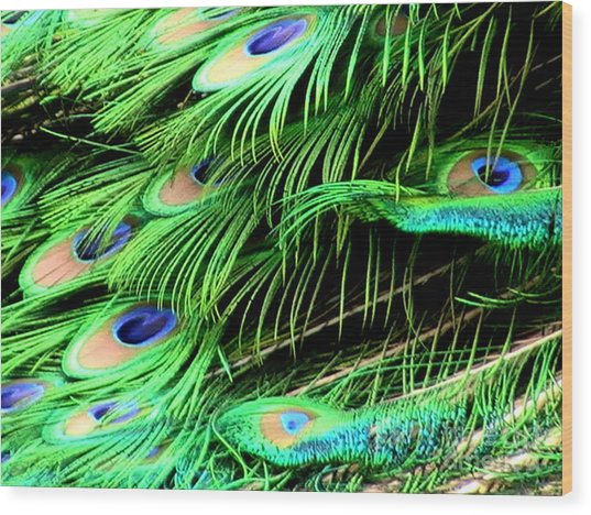 Peacock Feathers Wood Print by Toon De Zwart