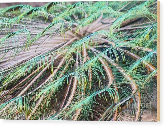 Peacock Wood Print by Jesse McKay