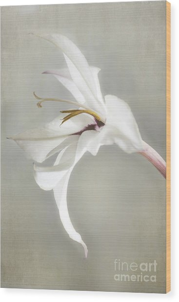 Peacock Orchid Wood Print