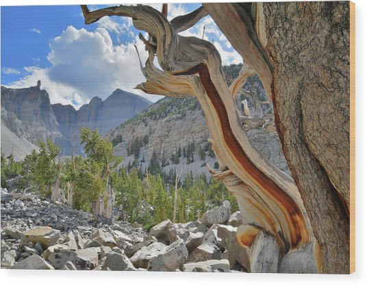 Peak Bristlecone Pine Wood Print