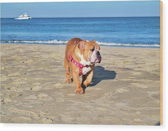 Peanut On The Beach Wood Print