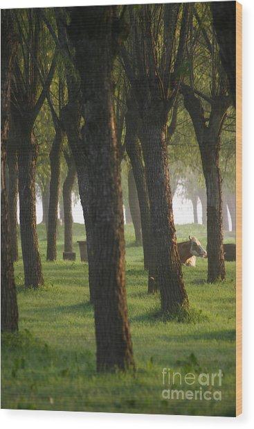 Peek A Cow Wood Print