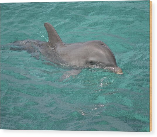 Peeking Dolphin Wood Print