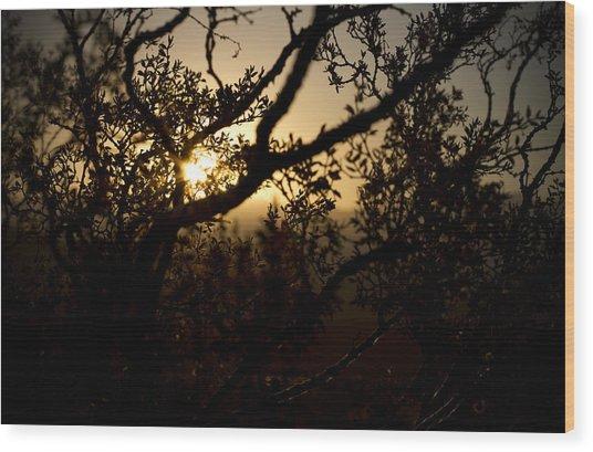 Peeking Sun Wood Print by Mike Hill