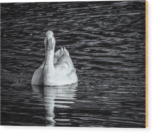 Pekin Duck Monochrome Wood Print