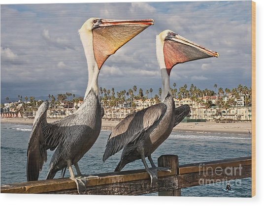 Pelican - A Happy Landing Wood Print