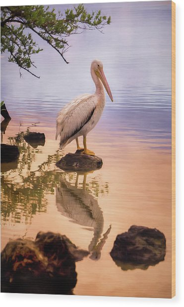 Pelican Connection 2 Wood Print